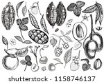 set of graphic botanical... | Shutterstock .eps vector #1158746137