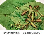 different big and small green... | Shutterstock . vector #1158903697