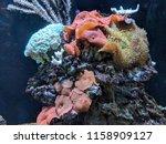 coral reef aquarium with... | Shutterstock . vector #1158909127