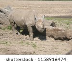 Rhino At Kansas City Zoo