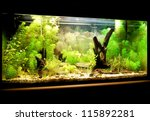Stock photo natural aquarium representing tropical biotop 115892281