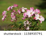 close up with flower | Shutterstock . vector #1158935791