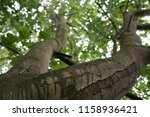 close up with a tree | Shutterstock . vector #1158936421