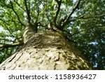 close up with a tree | Shutterstock . vector #1158936427