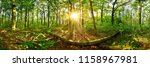 beautiful forest in summer with ... | Shutterstock . vector #1158967981
