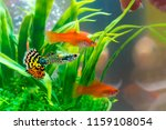 little fish in fish tank or... | Shutterstock . vector #1159108054