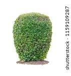 shrubs beautiful bush isolated  ... | Shutterstock . vector #1159109287