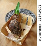 Germinating bulb of hippeastrum in a small basket on a wooden background - stock photo