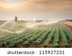 irrigation of vegetables into...