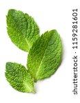 fresh mint leaves  isolated on... | Shutterstock . vector #1159281601