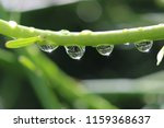 macro photograph of a green... | Shutterstock . vector #1159368637