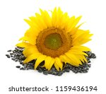 beautiful sunflower and seeds... | Shutterstock . vector #1159436194