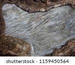 background texture of tree... | Shutterstock . vector #1159450564