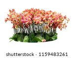 flower orchids plant bush tree... | Shutterstock . vector #1159483261