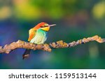colored bird in the sun's... | Shutterstock . vector #1159513144