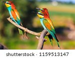 three exotic birds are sitting... | Shutterstock . vector #1159513147