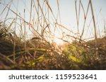Sunlight Through Long Dried...