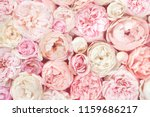 Stock photo summer blossoming delicate roses on blooming flowers festive background pastel and soft bouquet 1159686217