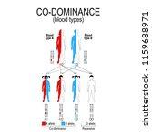 autosomal dominant or autosomal ... | Shutterstock .eps vector #1159688971