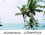 palm trees against blue sky ... | Shutterstock . vector #1159699324