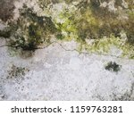 moss lichen on concrete road... | Shutterstock . vector #1159763281