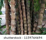 bamboo clump texture background | Shutterstock . vector #1159764694