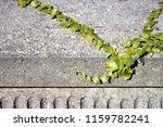 ivy on a concrete wall | Shutterstock . vector #1159782241