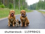 Three Dogs Sitting On A Road I...