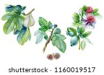 watercolor illustration  feijoa ... | Shutterstock . vector #1160019517