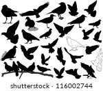 set of 28 birds and silhouettes ... | Shutterstock .eps vector #116002744