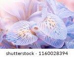 macro petals orchid background  ... | Shutterstock . vector #1160028394