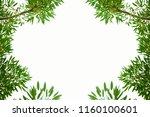 bush leaves leaf frame green... | Shutterstock . vector #1160100601