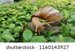 snail on green leaves | Shutterstock . vector #1160143927