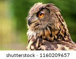 owls are birds from the order... | Shutterstock . vector #1160209657