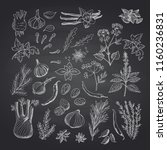 vector hand drawn herbs and... | Shutterstock .eps vector #1160236831