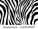 Zebra Stripes Pattern. Zebra...