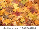 Seasonal Autumn Background Of...