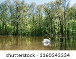 solitary swan on lake in lush... | Shutterstock . vector #1160343334