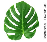 monstera large leaf isolated.... | Shutterstock . vector #1160434231