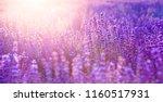 lavender field aerial view.... | Shutterstock . vector #1160517931