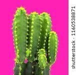 art cactus creative fashion... | Shutterstock . vector #1160538871