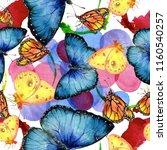 exotic butterflies wild insect...   Shutterstock . vector #1160540257