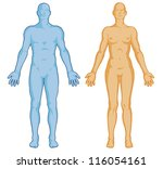 Постер, плакат: Female male body shapes