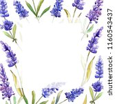 watercolor purple lavender... | Shutterstock . vector #1160543437