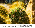 close up macro shot of a green... | Shutterstock . vector #1160581471