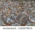 stone floor with autumn  in... | Shutterstock . vector #1160678014