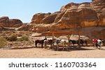 Arabian Horses Standing Under...