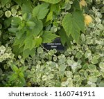 botanical identification label... | Shutterstock . vector #1160741911