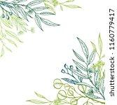 vector eucalyptus hand drawn...   Shutterstock .eps vector #1160779417
