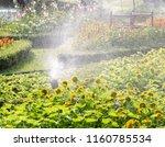 springer watering in the flower ... | Shutterstock . vector #1160785534